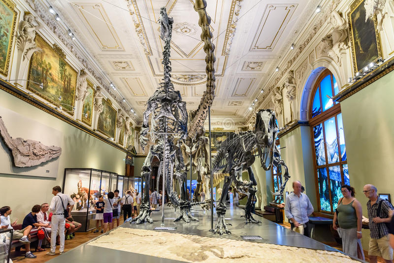 Natural History Museum Dinosaur Exhibition Review
