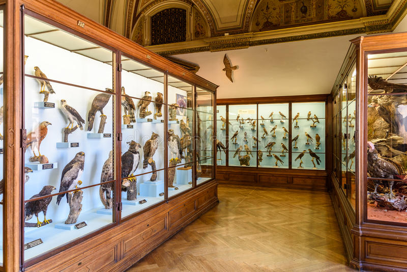 People Visit The Museum of Natural History (Naturhistorisches Museum). VIENNA, AUSTRIA - AUGUST 10, 2015: People Visit The Museum of Natural History ( royalty free stock image
