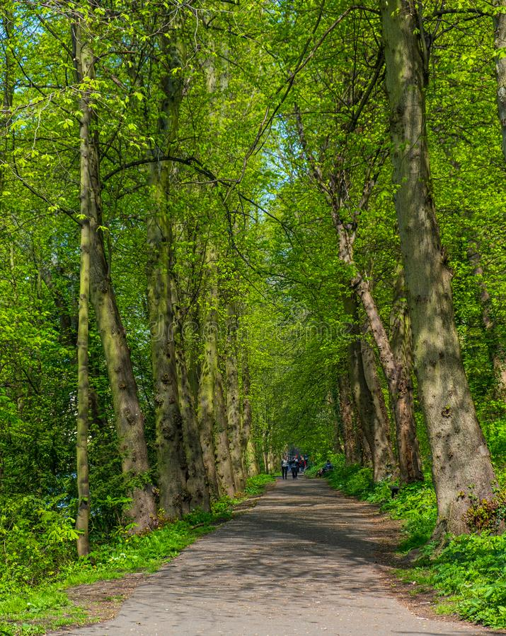 People walk along a walkway surrounded by a lush forest in Durham, United Kingdom on a beautiful spring day. Durham, United Kingdom - April 30, 2019: People walk royalty free stock image