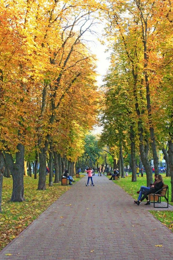 People walk on autumnal city park. Season of autumn with yellow foliage on trees stock photography