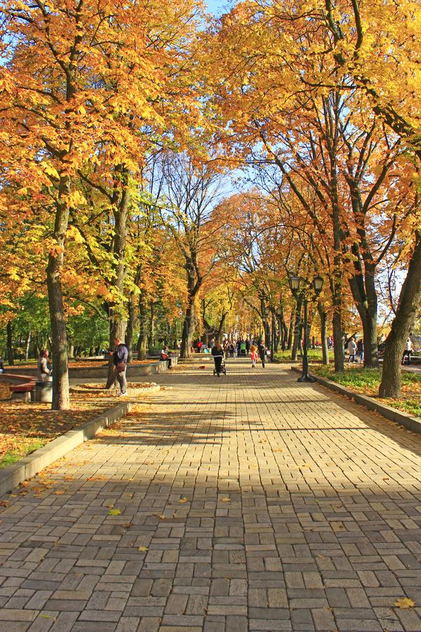 People walk on autumnal city park. Season of autumn with yellow foliage on trees royalty free stock photography