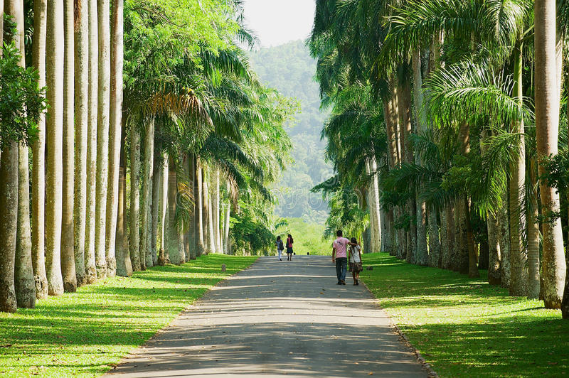 People walk by the palm trees alley in the Peradeniya Royal Botanical Garden in Kandy, Sri Lanka. KANDY, SRI LANKA - MAY 22, 2011: Unidentified people walk by stock images