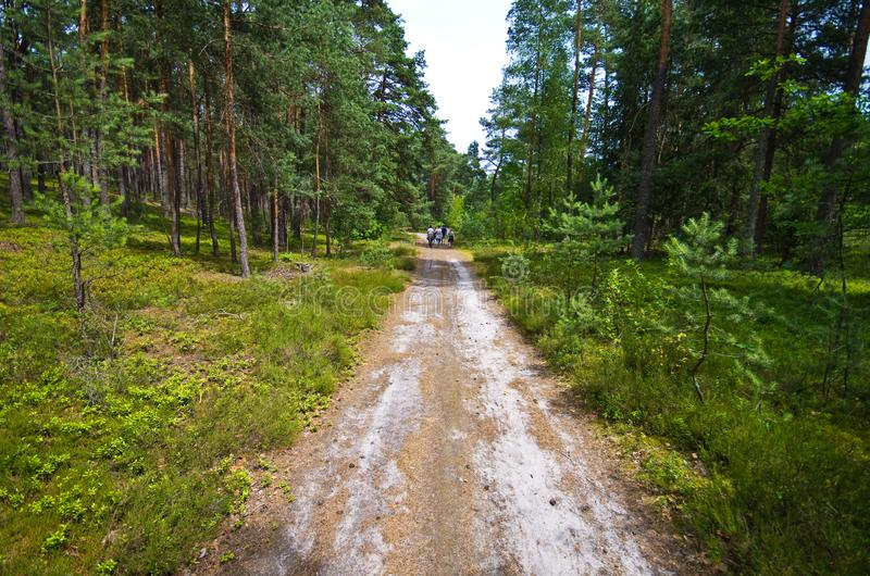 People walk in Roztocze Poland forest royalty free stock photo