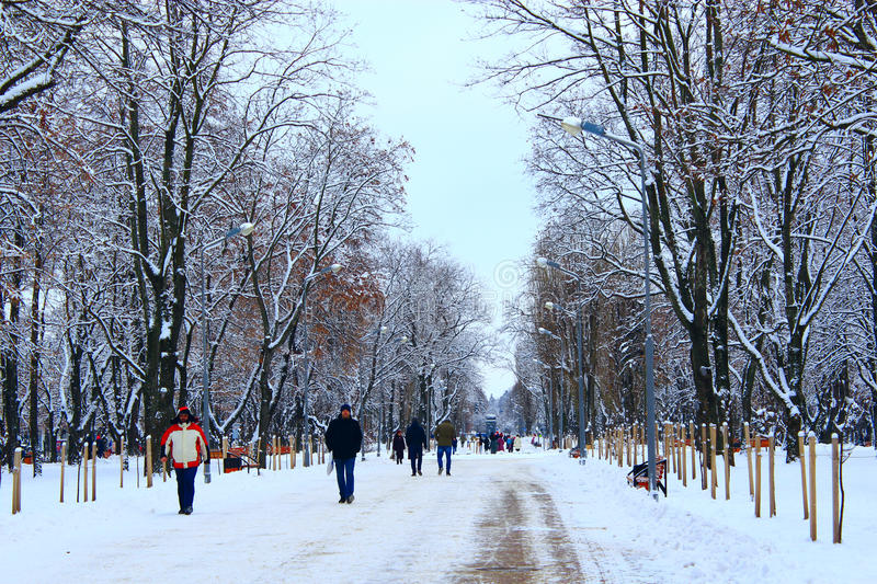 People walk in winter park with many big trees and path royalty free stock photos