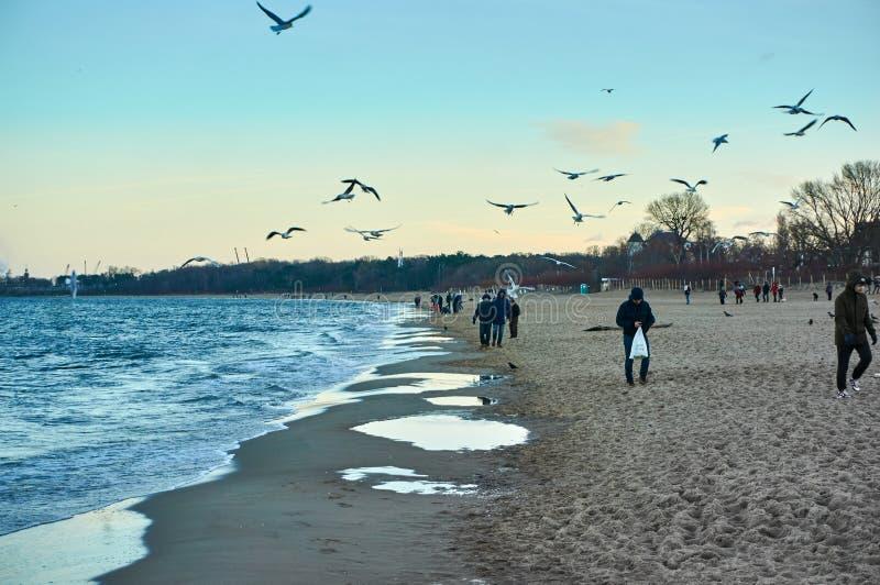People walking along the beach of the Baltic sea enjoying the sunset and feeding sea birds. stock photo