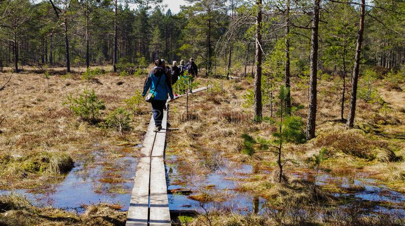 People Walking in Brown Wooden Planks in Forest royalty free stock photography