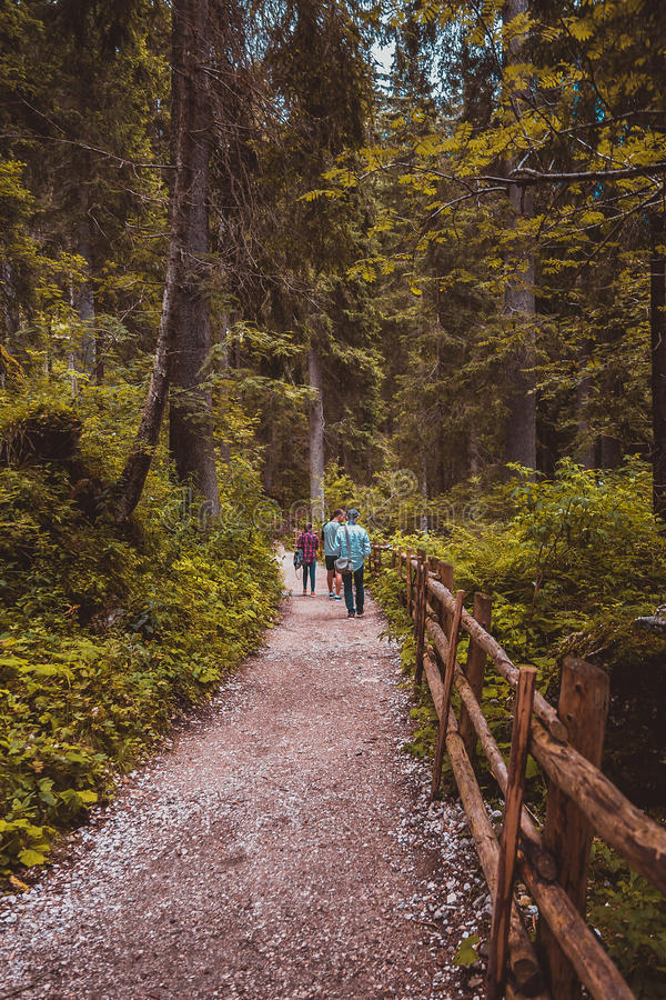 People are walking in a forest royalty free stock photos