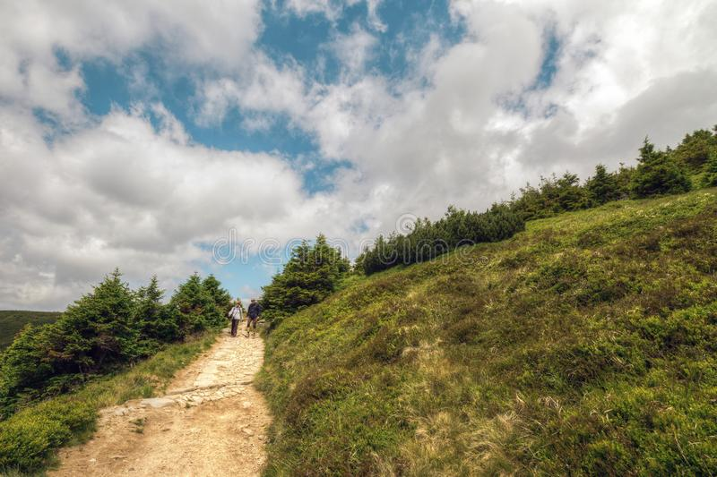 People Walking Outside the Pine Tree Forest royalty free stock images