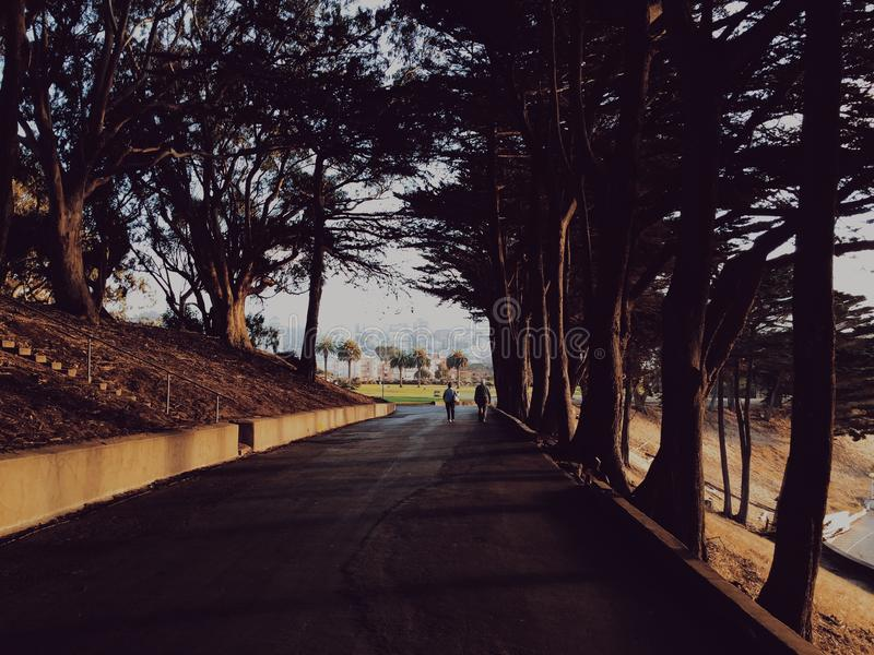 People Walking On The Road Beside The Trees During Day Time Free Public Domain Cc0 Image