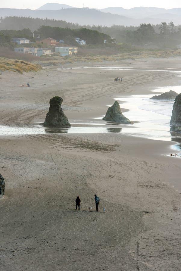 Walking dogs on the Oregon coast stock photography