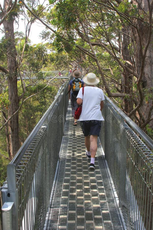 People are walking the Tree Top Walk in the Valley of the Giants, Australia stock photo