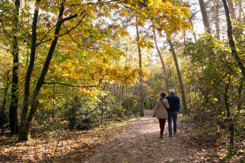 People walking in woods, fall in Netherlands. DOORN, NETHERLANDS - OCT 25, 2015: Senior couple walking in the woods on a sunny day in autumn royalty free stock image