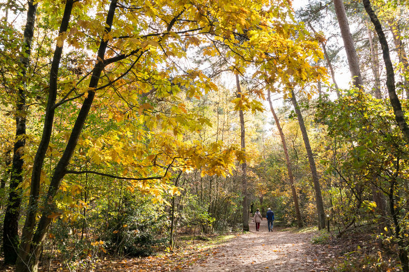 People walking in woods, fall in Netherlands. DOORN, NETHERLANDS - OCT 25, 2015: Senior couple walking in the woods on a sunny day in autumn stock photos