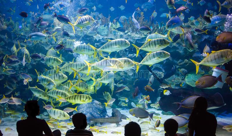 People watch for the sea life in the oceanarium of Kuala Lumpur stock photography