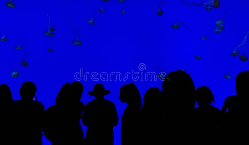 People watching jellyfish royalty free stock photo