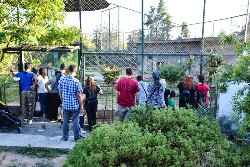 People are watching the lion at the zoo, in front of the lion`s cage. Darica, istanbul / Turkey -08 08 2019 :  people are watching the lion at the zoo, in front royalty free stock photography