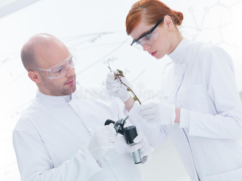 Download People Working In Chemistry Lab Stock Photo - Image: 31258192