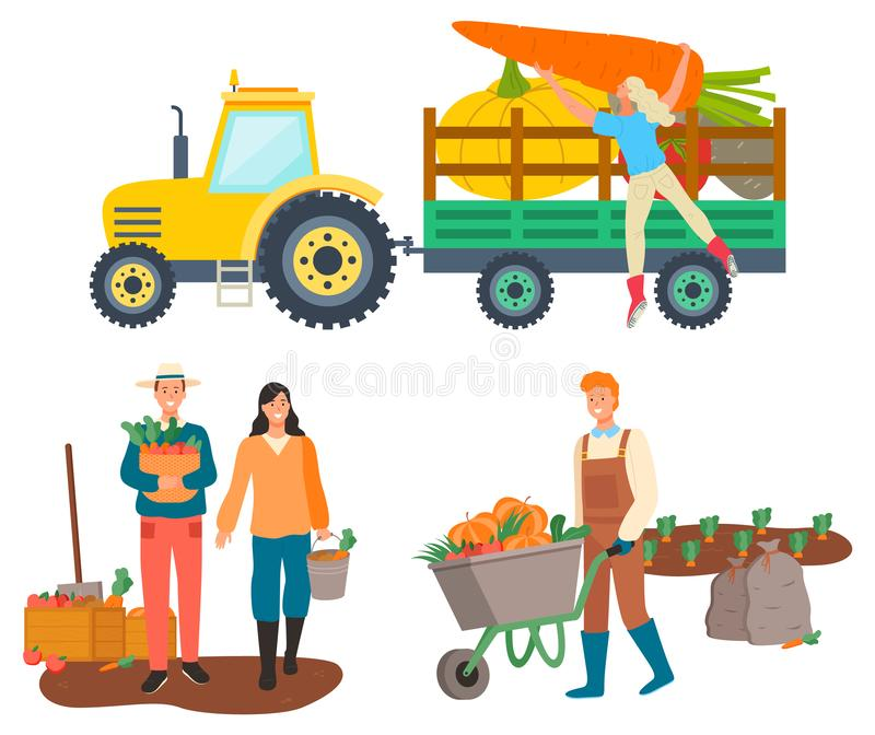 Farming People, Tractor Transportation of Goods. People working on farm vector, isolated tractor with character loading beetroots and carrots. Personage with stock illustration