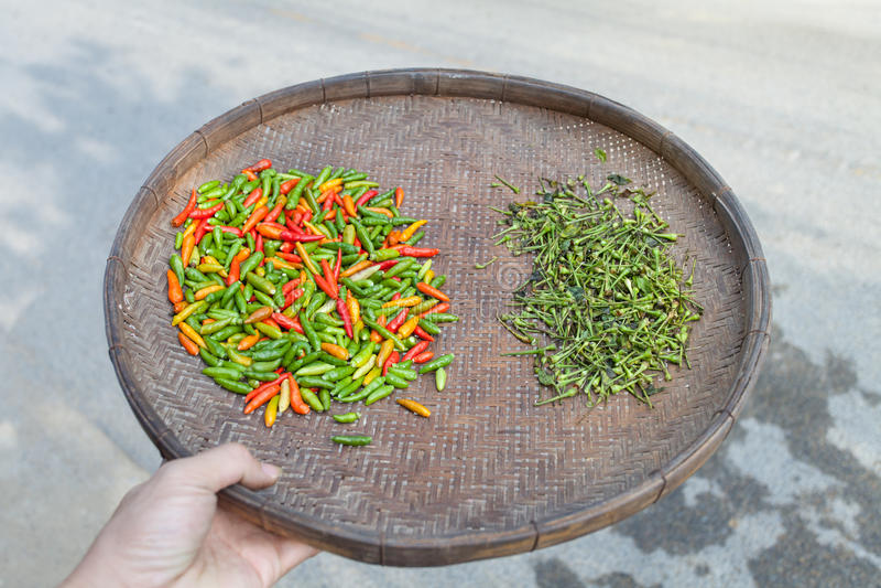 pepe di peperoncini rossi fotografia stock libera da diritti