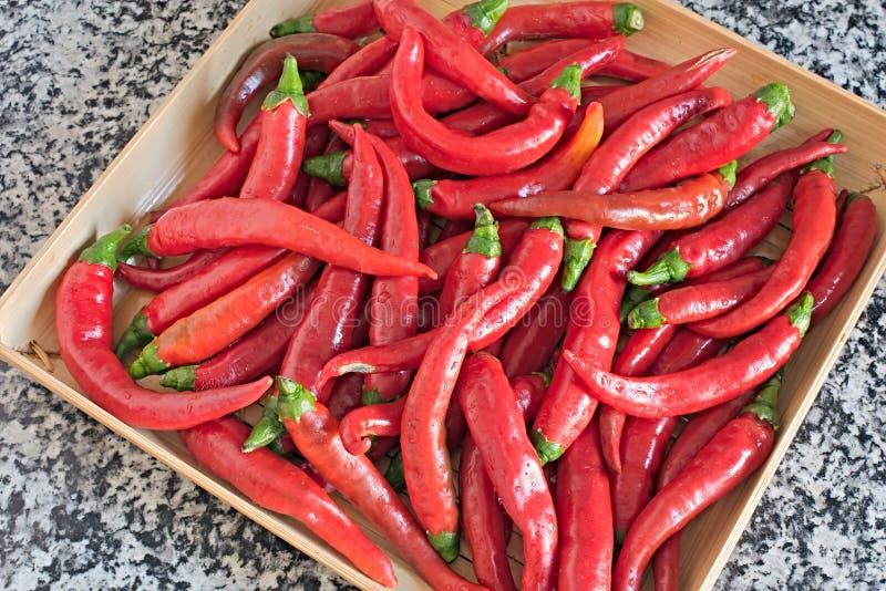 Pepe di peperoncino rosso fotografia stock libera da diritti