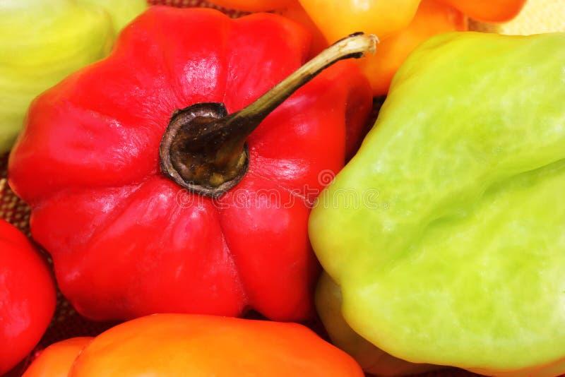 Pepe di peperoncino rosso multicolore caldo del habanero caraibico 2 fotografia stock libera da diritti