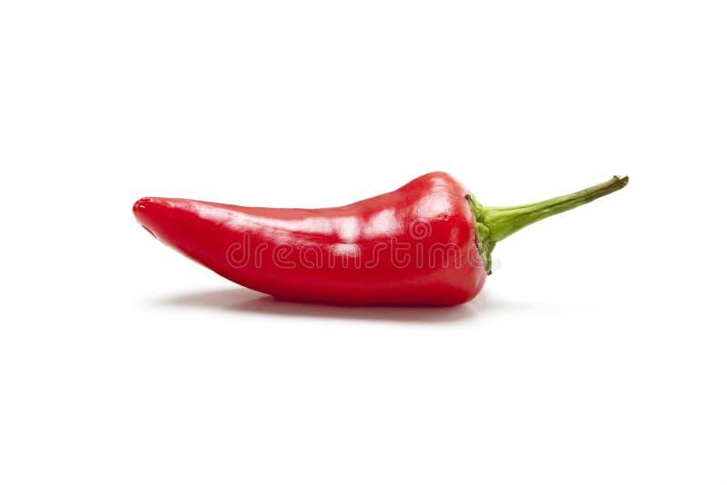 Pepe di peperoncino rosso rosso su bianco fotografia stock