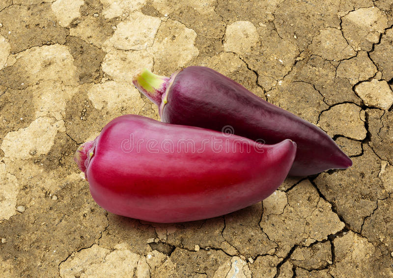 Pepe rosso della paprica su fondo incrinato immagini stock