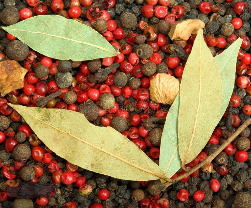 Pepe rosso e nero del primo piano con le foglie di alloro immagine stock