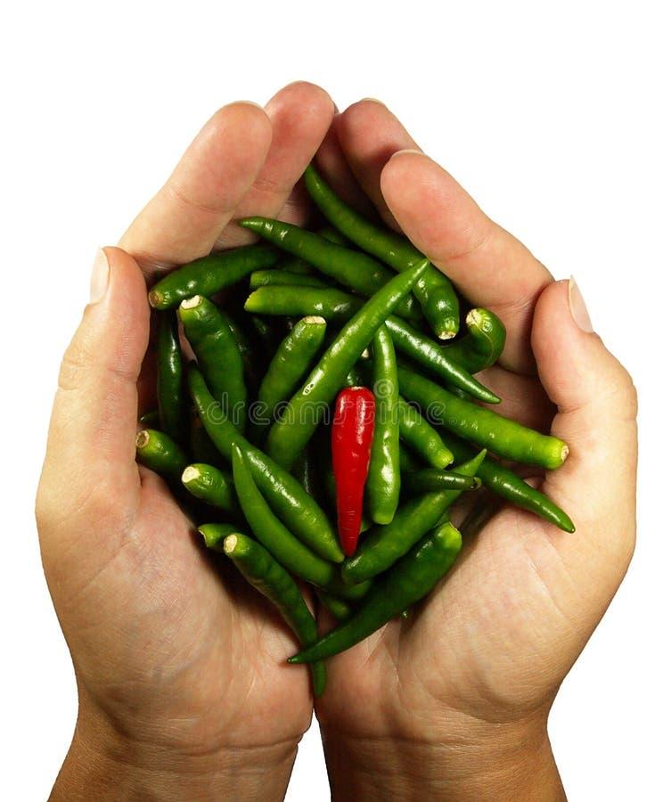 Peper do pimentão quente nas mãos fotografia de stock royalty free