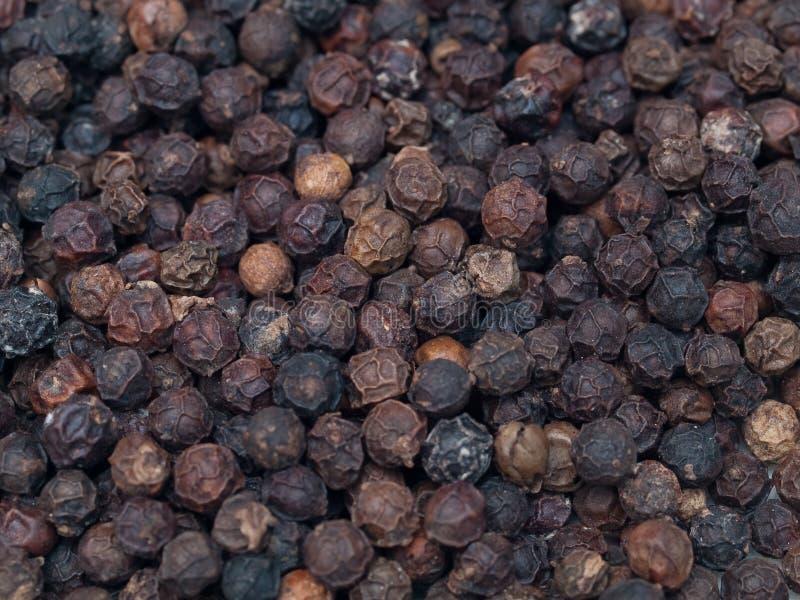 Peper2 preto secado imagens de stock