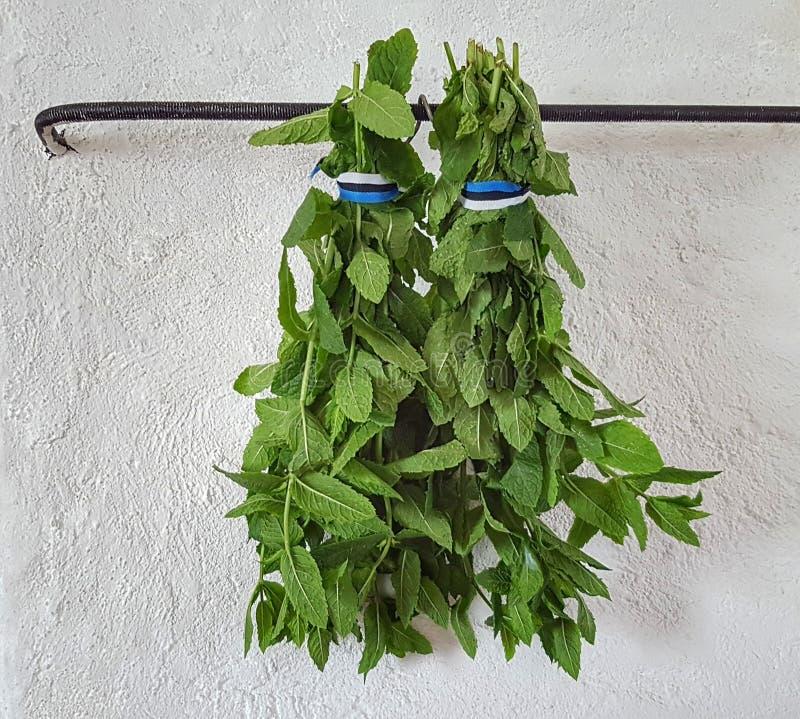 pepermunt stock afbeeldingen