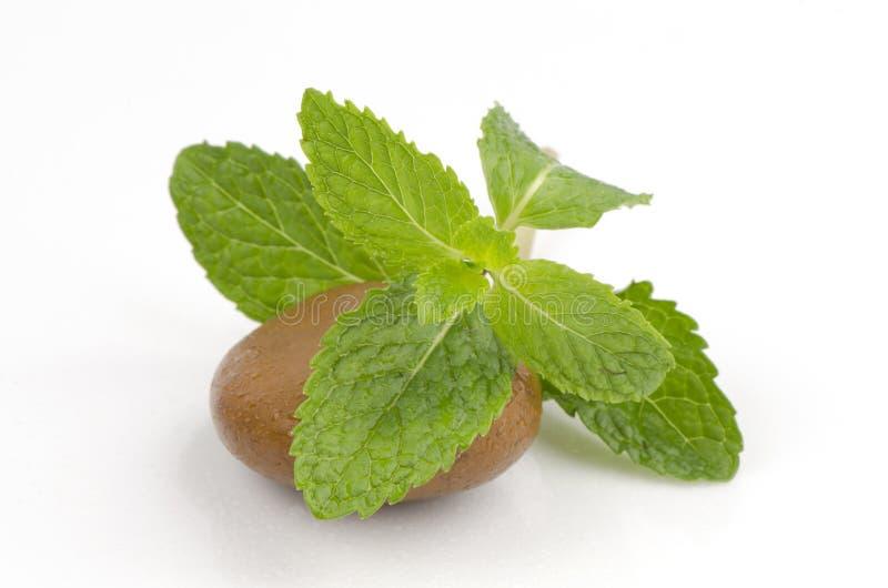 Pepermunt, salie, Keukenmunt, Marsh Mint (Mentha-cordifolia Opiz.) stock afbeeldingen
