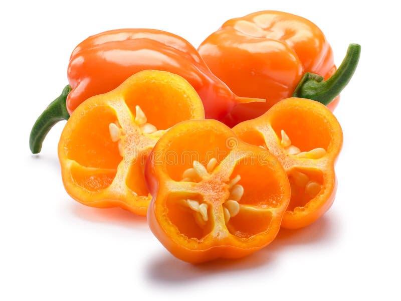 Peperoncini rossi arancio del Habanero, percorsi fotografia stock libera da diritti