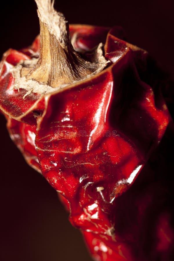 Peperoncini rossi asciugati immagine stock