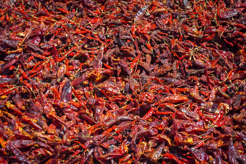Peperoncini rossi rossi gondal famosi immagine stock