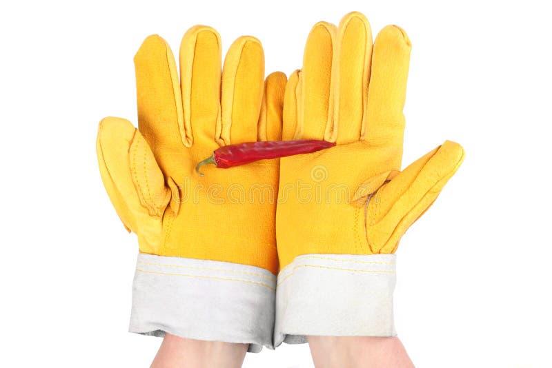 Peperoncino rosso molto caldo fotografia stock libera da diritti