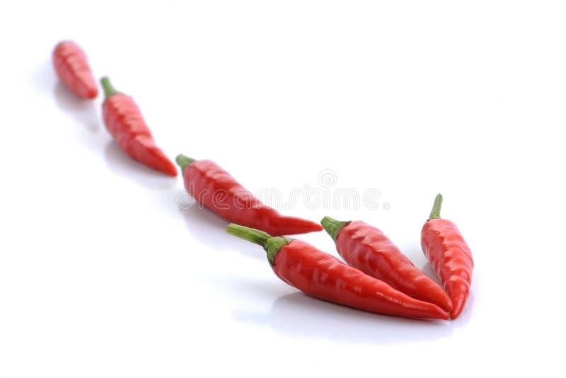 Peperoncino rosso rosso fotografie stock