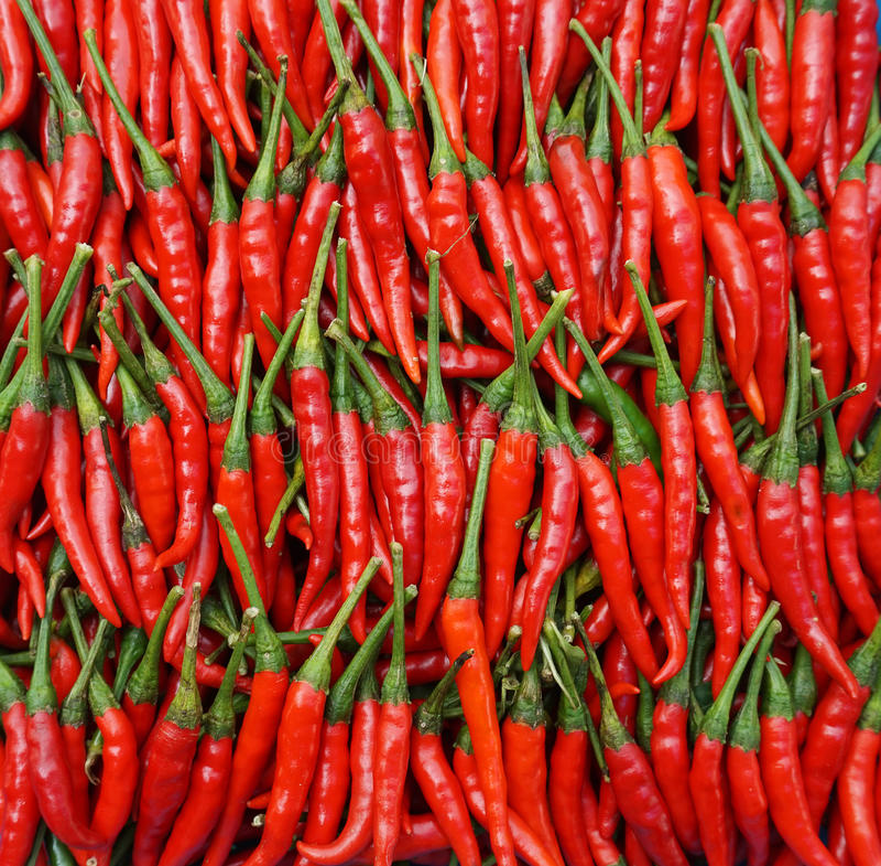 Peperoncino rosso rosso immagini stock