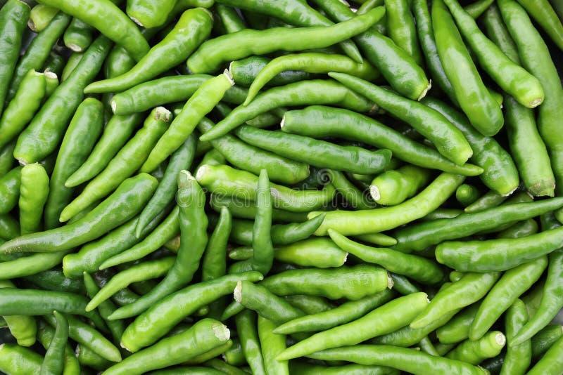 peperoncino rosso verde per il modello ed il fondo fotografia stock