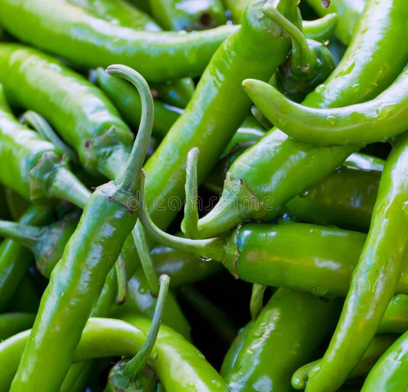 Peperone verde fotografie stock