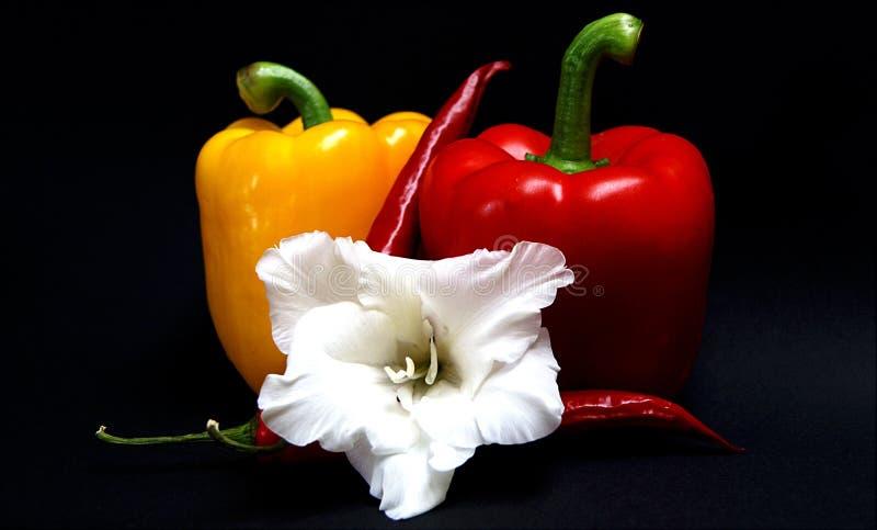 peperoni πάπρικας λουλουδιών στοκ εικόνες