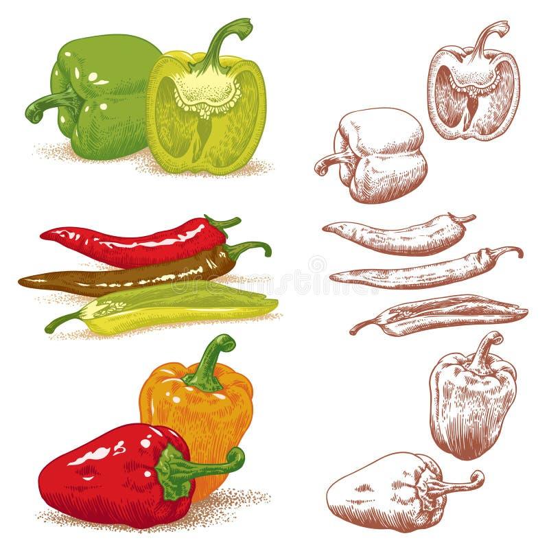 Peperoni illustrazione di stock