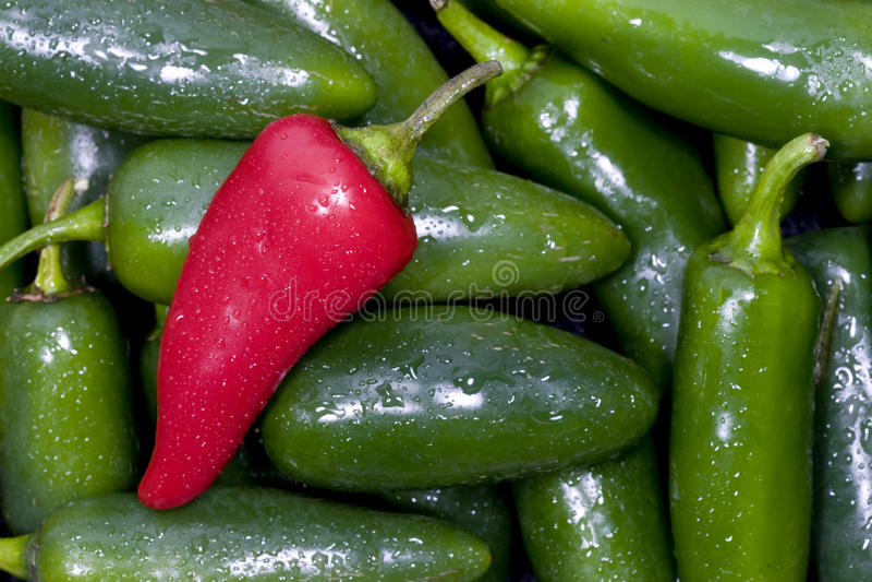 Peperoni del Jalapeno fotografie stock