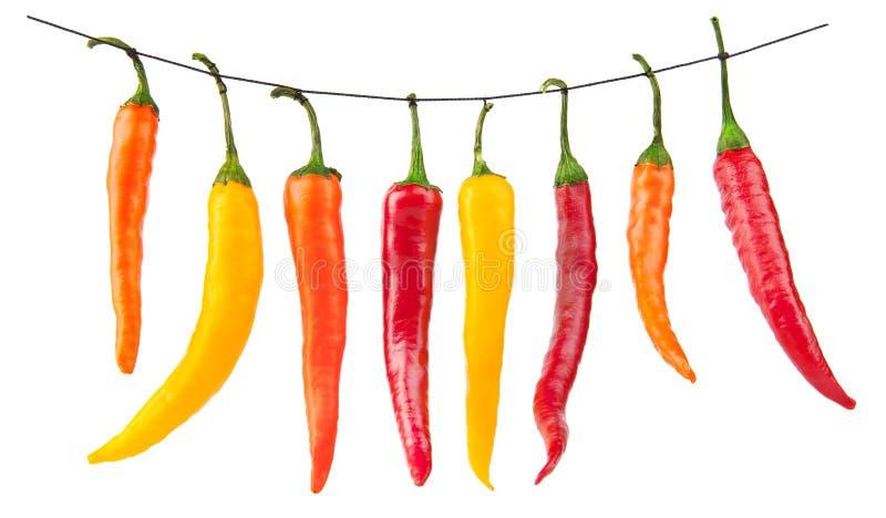 Peperoni di peperoncini rossi gialli rossi isolati su bianco immagini stock libere da diritti