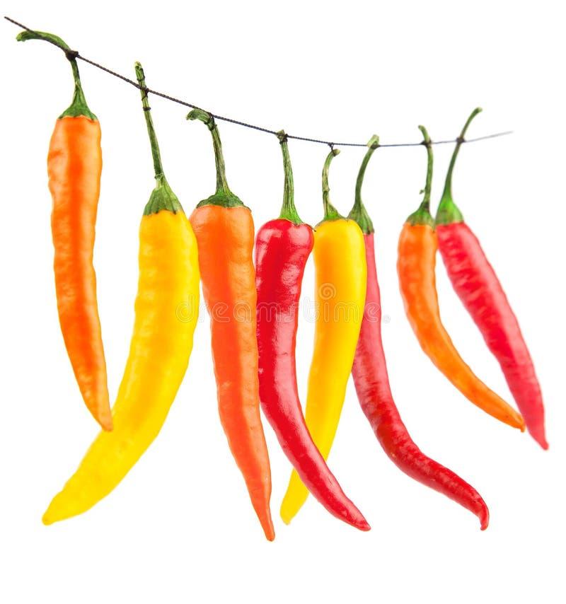 Peperoni di peperoncini rossi gialli rossi isolati su bianco fotografia stock