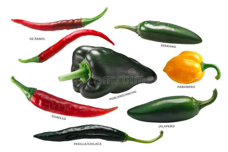 Peperoni di peperoncino rosso messicani, percorsi fotografia stock libera da diritti