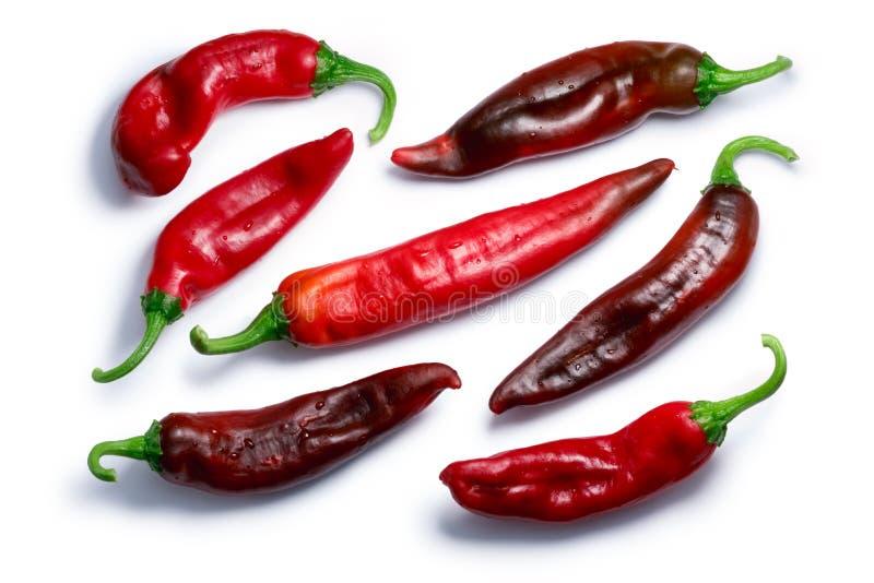 Peperoni di peperoncino rosso rossi della covata, percorsi, vista superiore fotografia stock libera da diritti