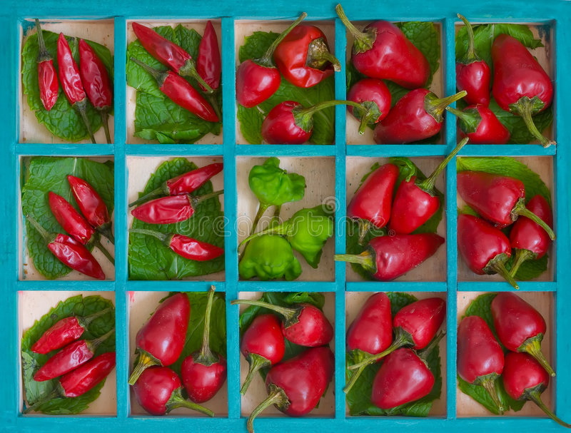 Peperoni di peperoncino rosso rosso immagini stock libere da diritti