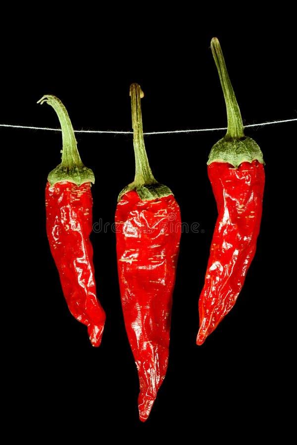 Peperoni di peperoncino rosso rosso secchi fotografie stock