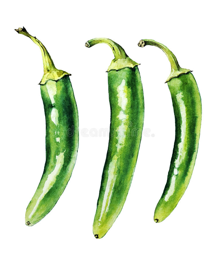 Peperoni freddi verdi immagine stock libera da diritti